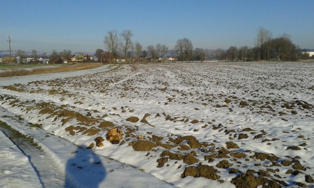 Ackerfläche in der Aschachniederung